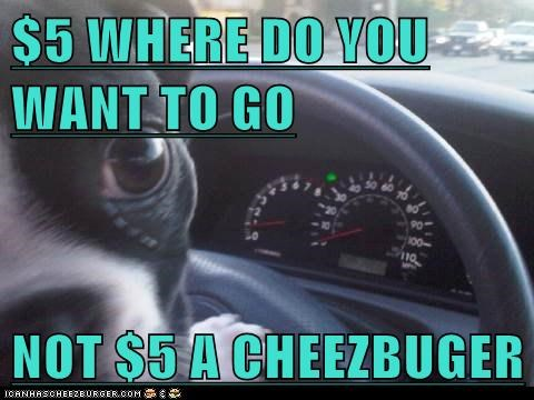 Cheezburger Image 6314500096