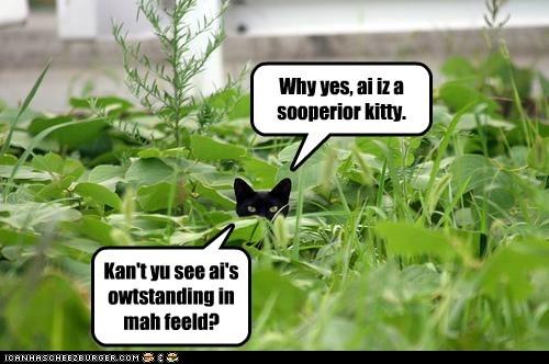 Why yes, ai iz a sooperior kitty. Kan't yu see ai's owtstanding in mah feeld?