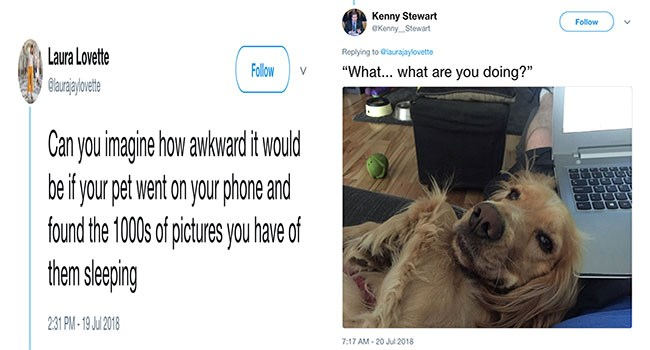 funny tweets about pets finding out we take pics of them sleeping