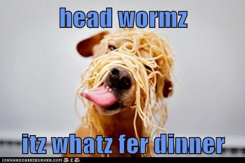 Cheezburger Image 6315339264