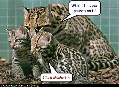 leopard leopard kittens leopard mom mcmuffin - 6315341056
