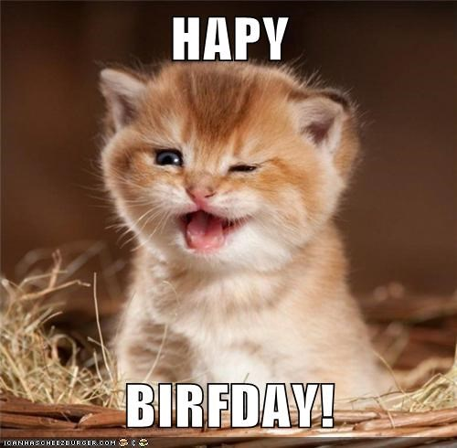 cute,derp,happy birthday,kitty kitten