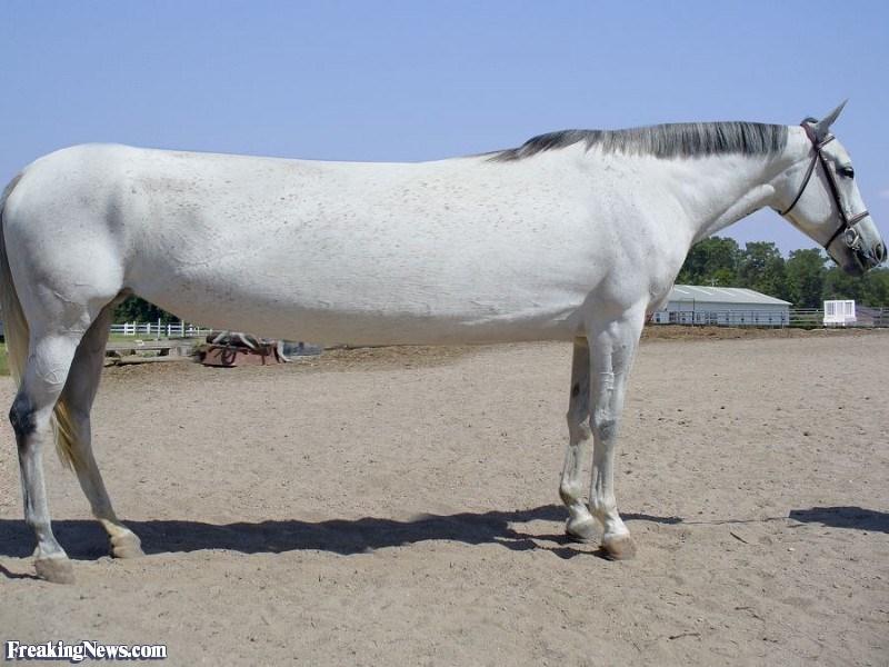 photoshops of animals to make them humorously long