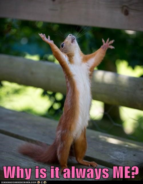 alas,always,arms up,captions,heavens,me,squirrel,squirrels,whining,why