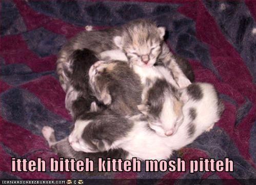 kitten,lolcats,lolkittehs,mosh,pit