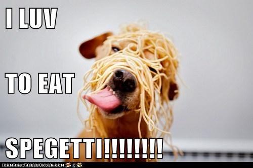 Cheezburger Image 6317175296