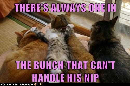 cant-handle-it,catnip,Cats,drugs,group,high,lolcats,nip,theres-always-one,too much