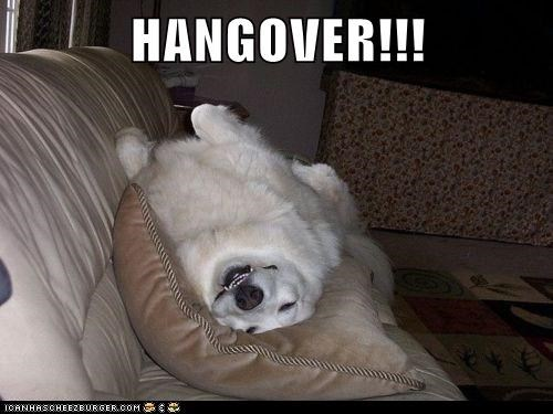 dogs hangovers Pillow sofa what breed - 6317980672