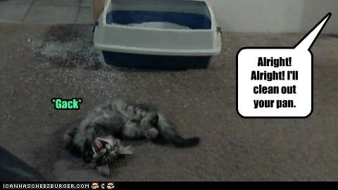 Drama Queen dramatic gross litter litter box overreaction poop smell - 6318217984
