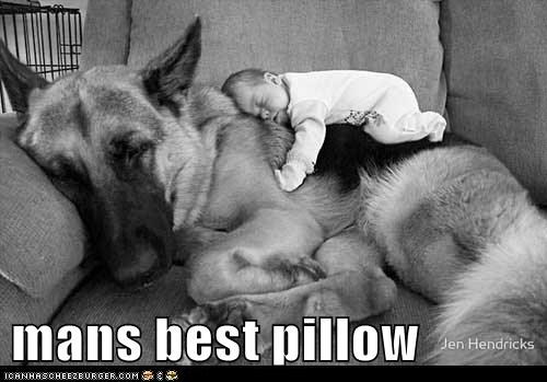 baby best of the week captions dogs german shephard german shepherd german shepherds Hall of Fame mans-best-friend nap Pillow - 6318620160