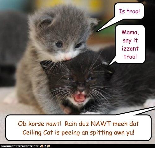 Is troo! Mama, say it izzent troo! Ob korse nawt! Rain duz NAWT meen dat Ceiling Cat is peeing an spitting awn yu!