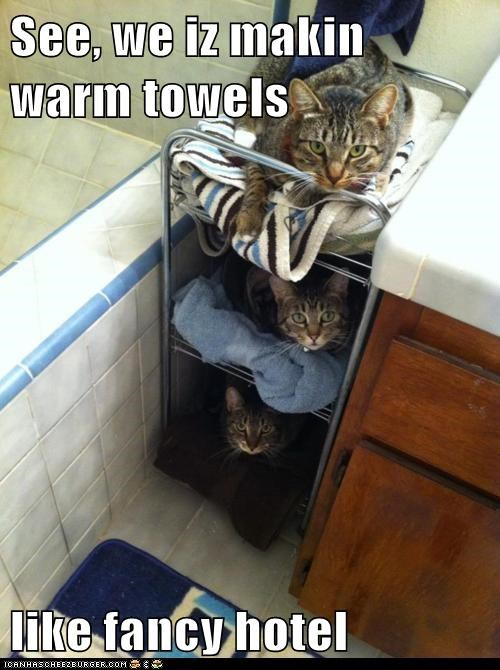 bathroom,bathrooms,Cats,fancy,hotel,hotels,lolcats,room service,towel,towels,tub,warm,warm towels