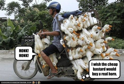 ducks,geese,motorcycles,political pictures