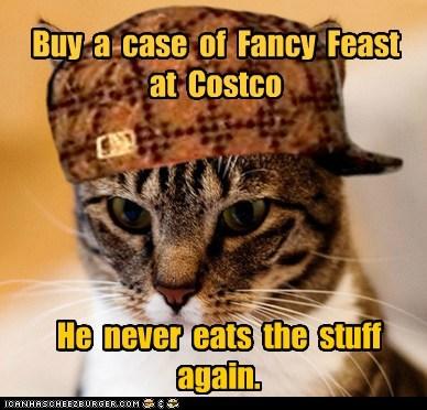 Scumbag Cat - 6319224320