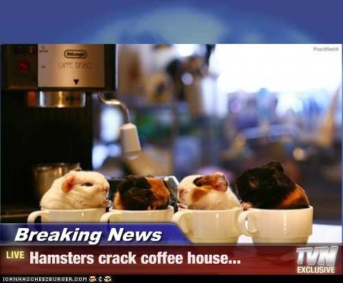 Breaking News - Hamsters crack coffee house...