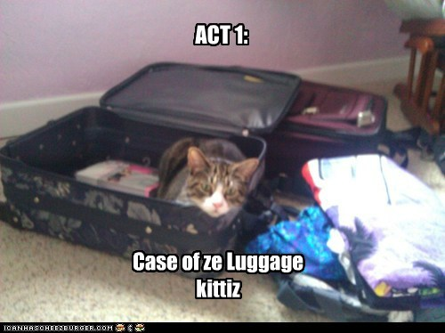 ACT 1: Case of ze Luggage kittiz