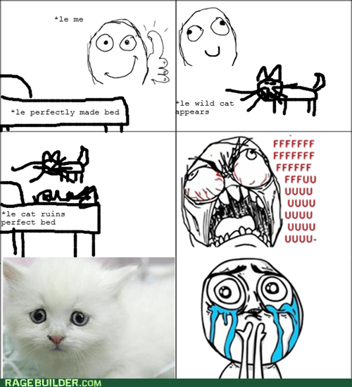 cute,cuteness overload,fu guy,kitty,Rage Comics