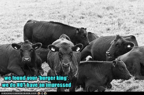 Cheezburger Image 6320036096