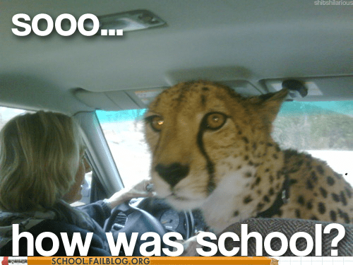 cheetah,how was school,jungle cats
