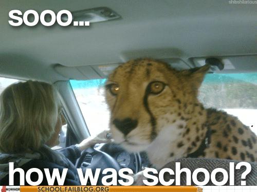 cheetah how was school jungle cats - 6320350976