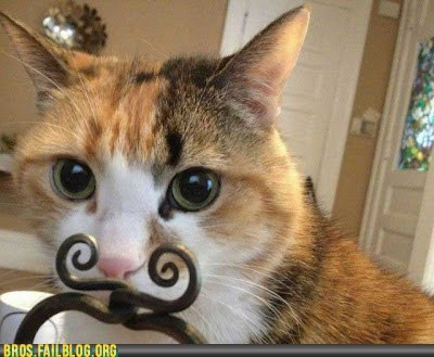 animals,cat,manimals,mustache