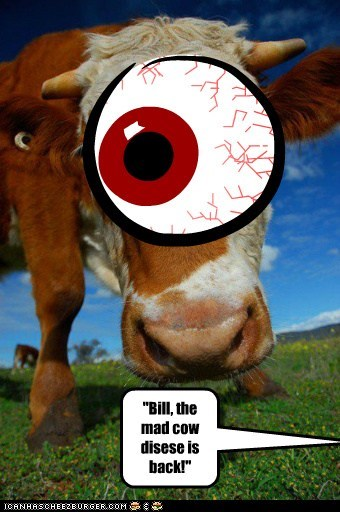 Cheezburger Image 6320854784