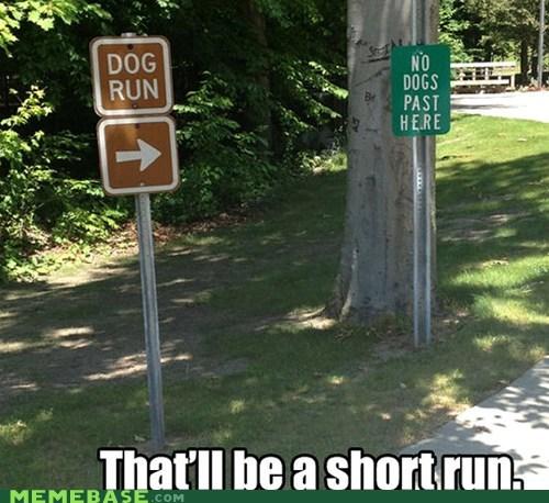 dogs lazy Memes run short - 6320856064