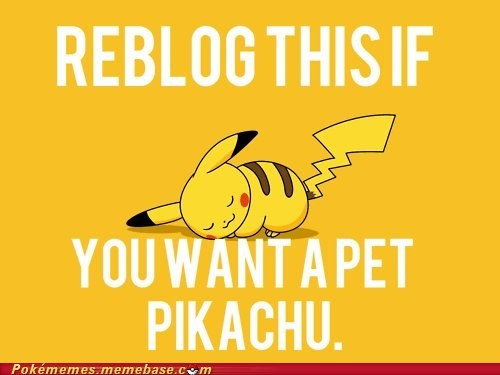 cute pet pikachu pls pls pls reblog the internets - 6320954880