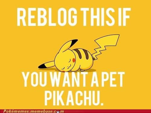 cute pet pikachu pls pls pls reblog the internets - 6320954880