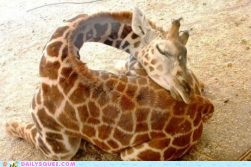 Baby Giraffe,butt,giraffes,long neck,nap,Pillow,squee