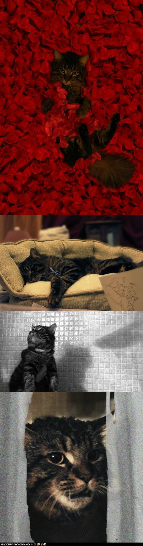 American Beauty,Cats,films,movies,psycho,reenactments,scenes,the shining,titanic