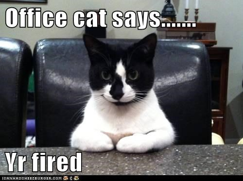 Office Cat Says Yr Fired Lolcats Lol Cat Memes Funny