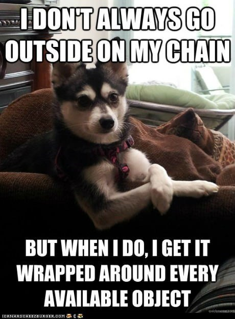 annoying chains dogs leashes Memes the most interesting dog the most interesting dog in the world the most interesting man in the world wrapped up - 6321281024