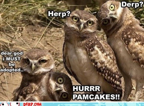 adopted,animals,best of week,derp,herp derp,owls,pancakes