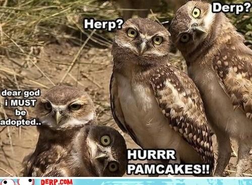 adopted animals best of week derp herp derp owls - 6321281792