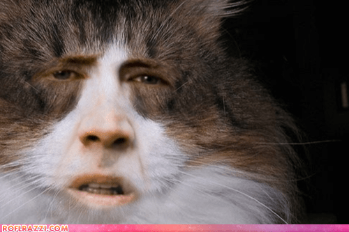 actor cat celeb funny nic cage nicolas cage shoop wtf - 6321469952