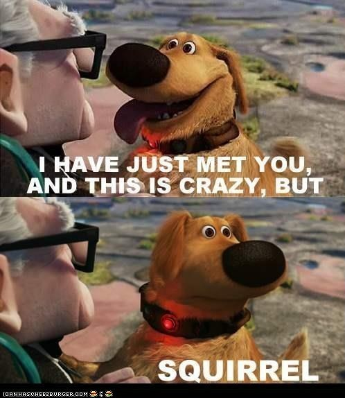 call me maybe,carly rae jepsen,distracted,dogs,i love you,lyrics,movies,Songs,squirrels,up