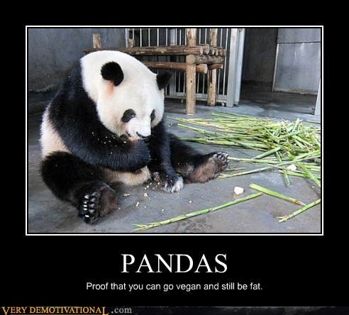 fat,hilarious,panda,proof,vegan