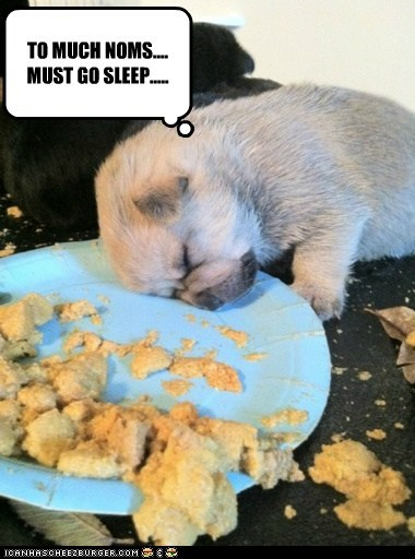 TO MUCH NOMS.... MUST GO SLEEP.....