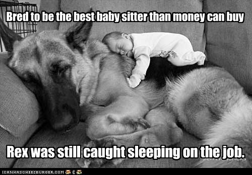 baby baby sitter dogs German Shepard nap sleep