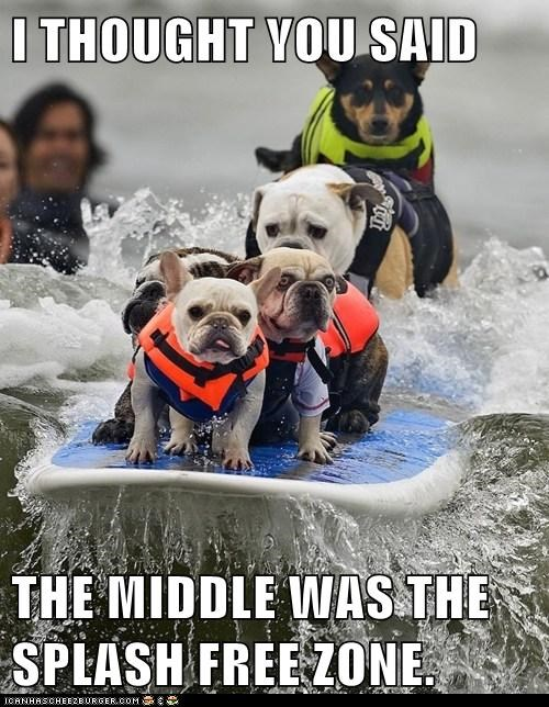bulldog,dogs,ocean,splash,surfing,water