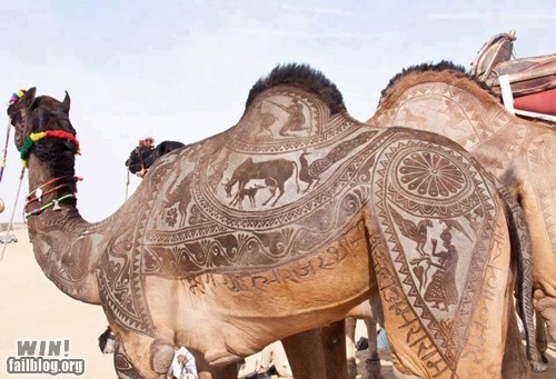 animals camel design haircut - 6322126336