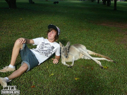 australia bros chilling hanging out kangaroo