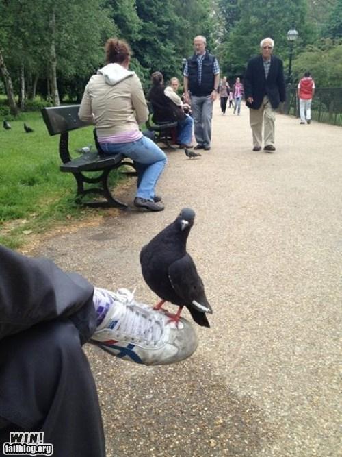 animals park photo op pigeon - 6322187776