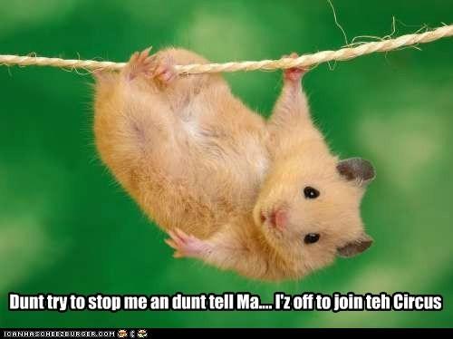 circus hamster hanging string - 6322967040