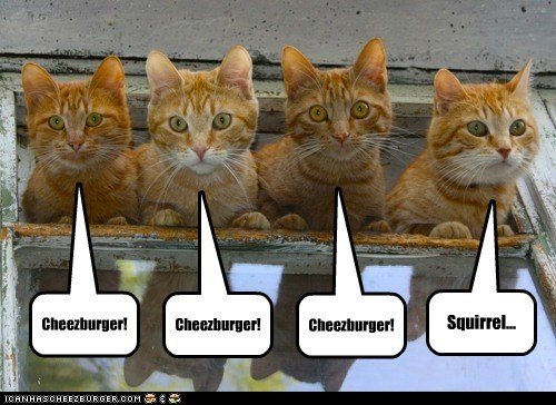 Cheezburger Image 6323196416