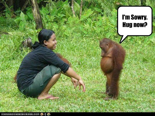 apologizing captions cute hug human-like mad orangutan orangutans slouch sorry standing