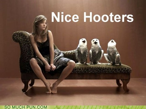 double meaning Hall of Fame hooters innuendo literalism Owl owls side by side - 6323680512