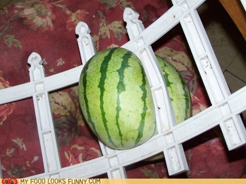 fence garden stuck watermelon - 6323871744