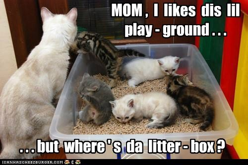 fun,kids,kitten,litter,litter box,mom,play,playground